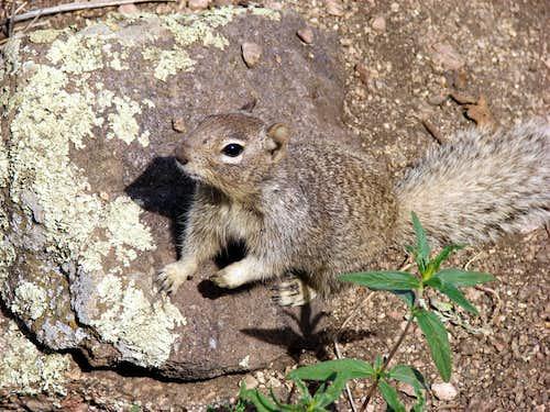 Sandia Mountain Wildlife