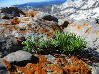 lichen unto thee