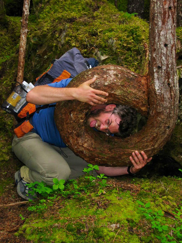 Beware of man-eating trees