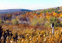 Fall view