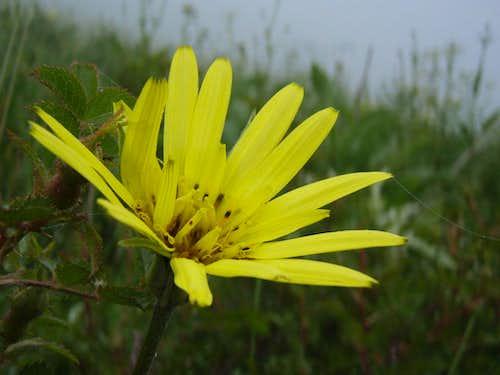 Siyalan's flora