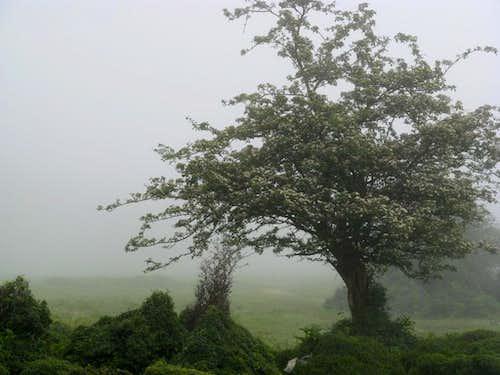Foggy plain of Daryasar
