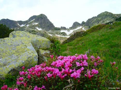 Retezat scenery in June