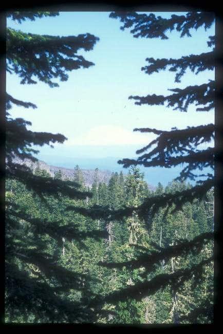 Looking at Mt. Rainer through...