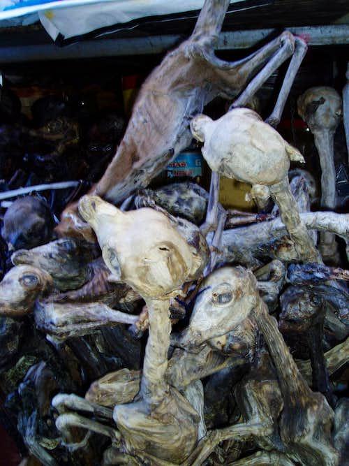dried lama fetus - witch market - La Paz