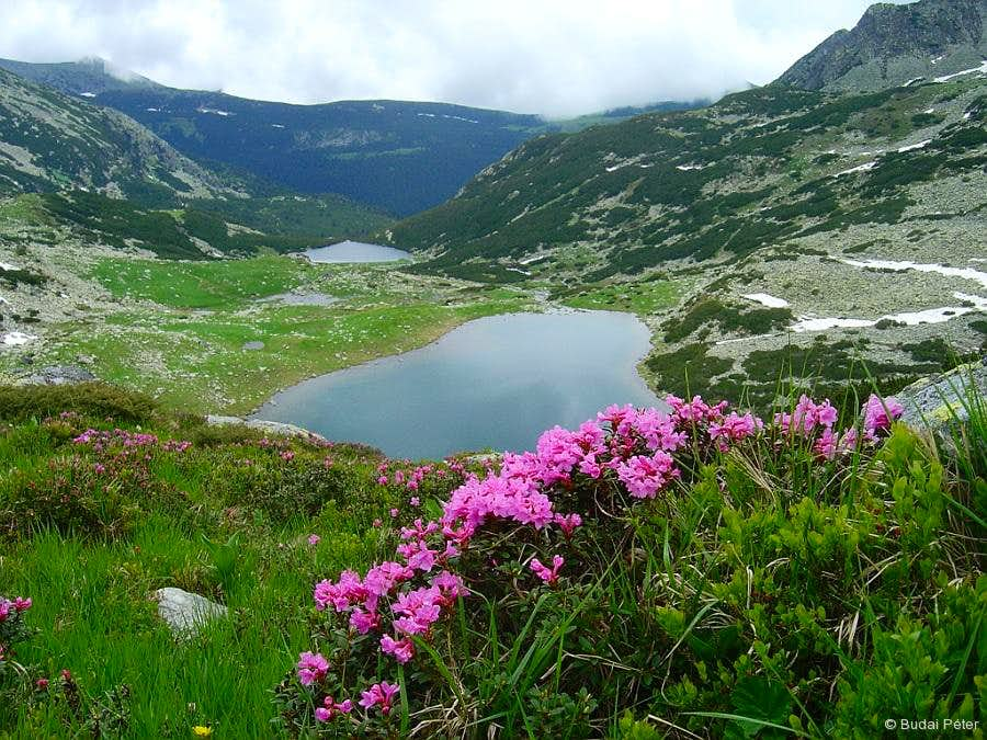 Lakes and flowers