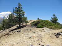 Little San Gorgonio Pk. (9133 )