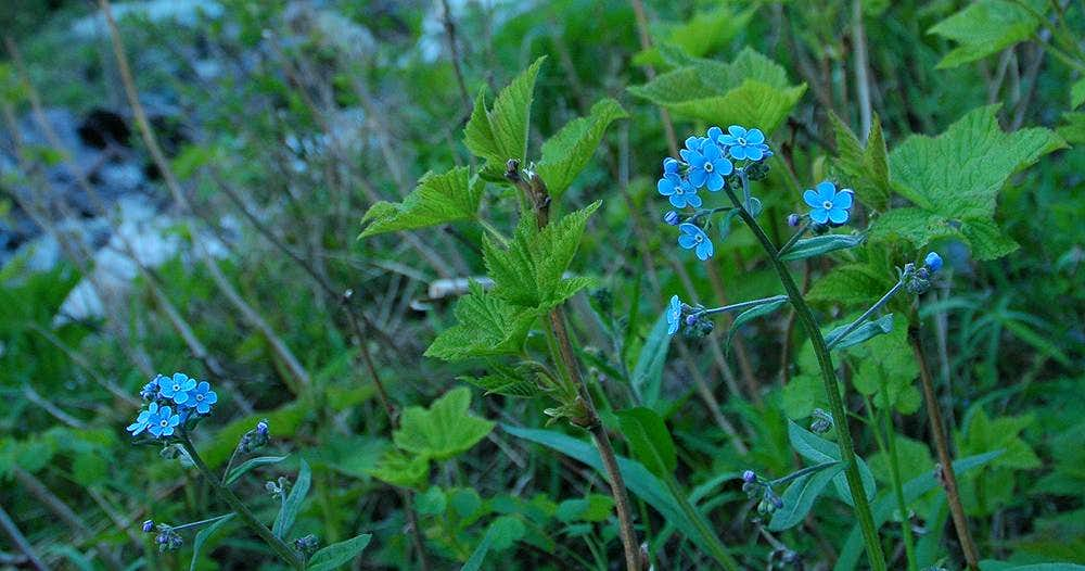 Mount Fisher Wildflowers