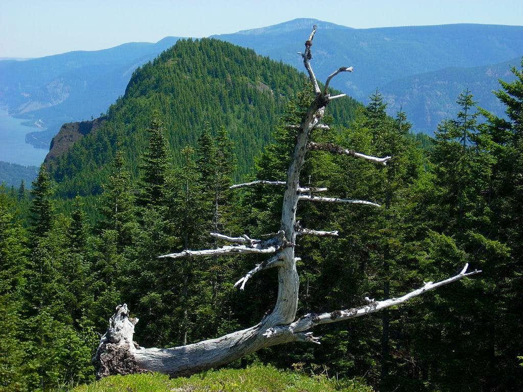Greenleaf Peak view