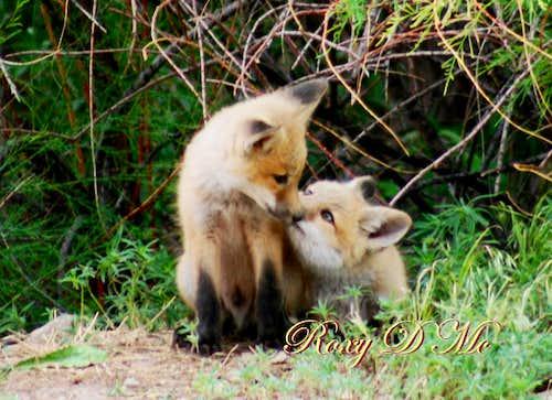 Give me a kiss!