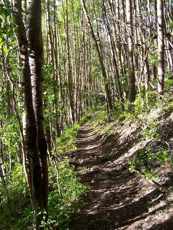Mt. Hope Trail