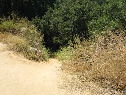 Trail into El Prieto Canyon