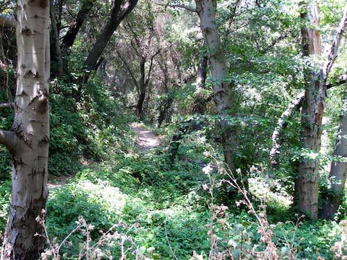 Lower El Prieto Canyon