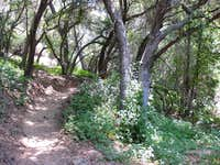 Trail in El Prieto Canyon