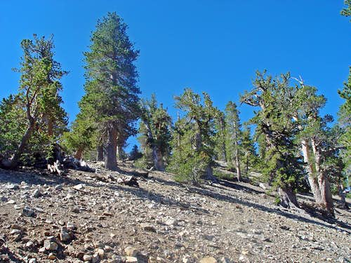 Near the Summit of Mount Baden-Powell