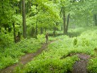 Massachussetts Rain Forest