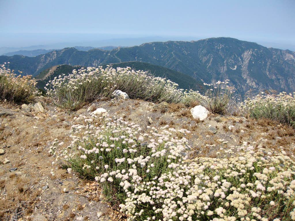 Mt. Lukens Ridge from Josephine FR