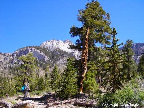 On Trail Canyon Trail