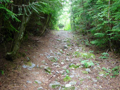 Dirty Harry\'s Logging Road-Trail
