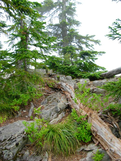 The Summit of Dirty Harry\'s Peak