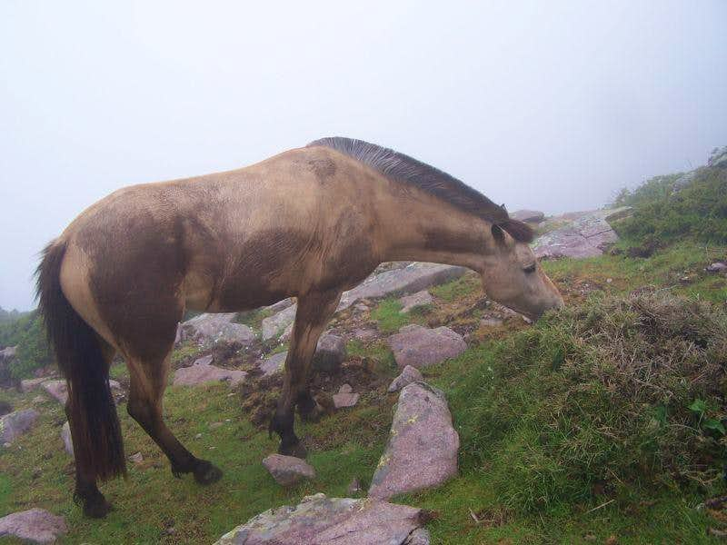 Wild? horses near the Refuge