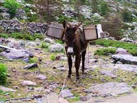 Donkey near the Bergeries de Ballone