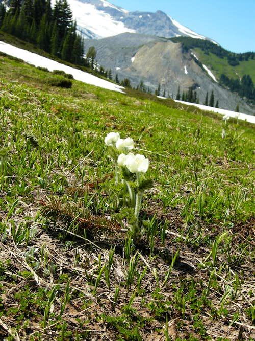 Wildflowers in Summerland