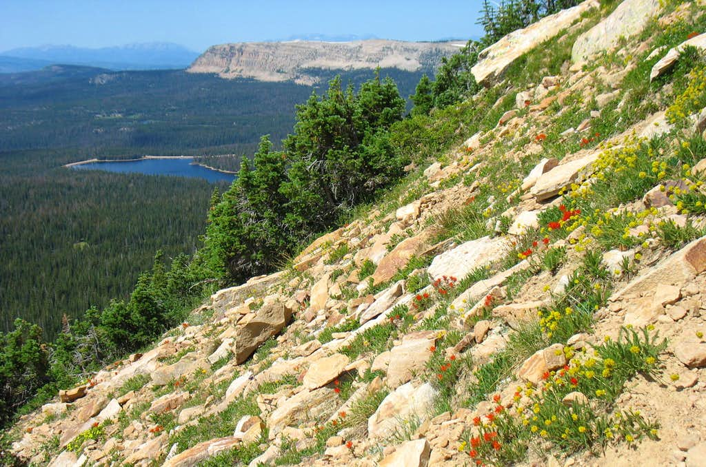 Bald Mountain Southern Slopes