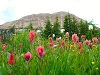 Pink Wildflowers below Bald Mountain