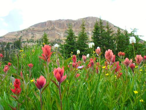 Pink Wildflowers below Bald Mountain