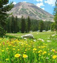 Yellow Wildflowers below Bald Mountain
