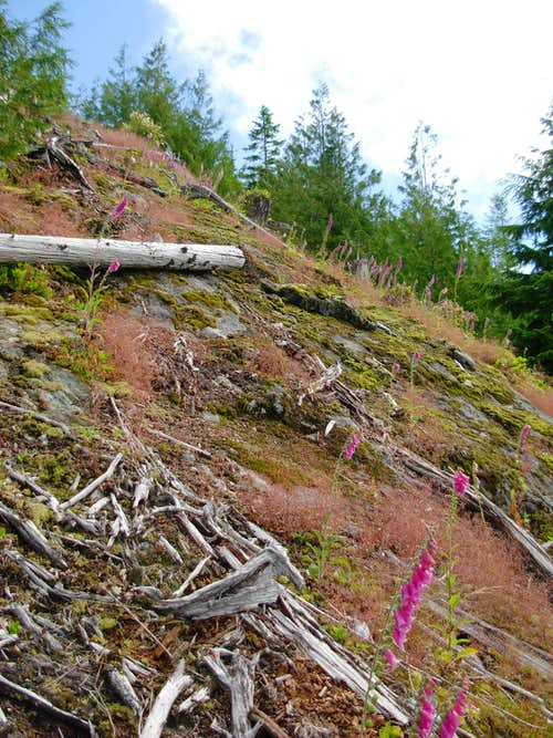 The Haystack Mountain Scramble Steepens...