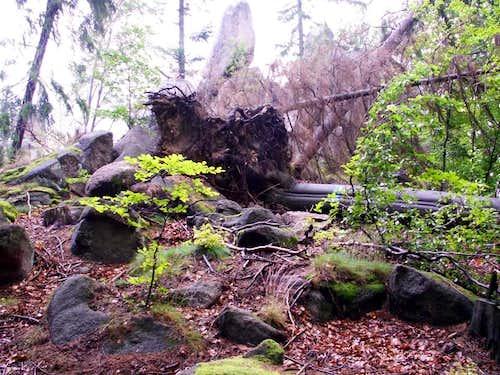 Damaged trees ....