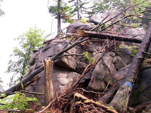 Broken trees ...
