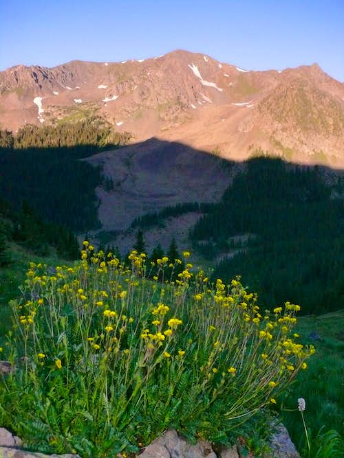 Lake Fork Peak and Cinquefoil