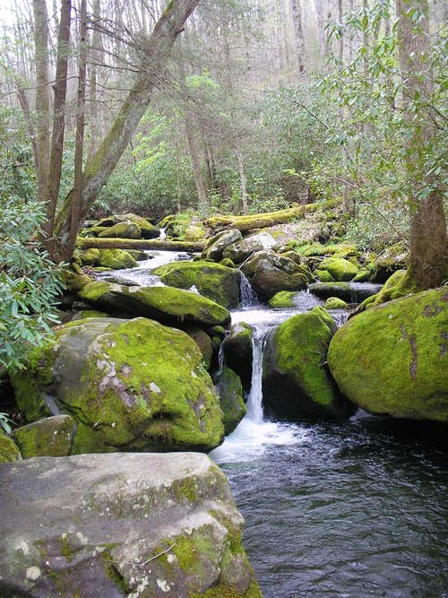 Jakes Creek Trail