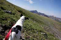 Pup\'s First Peak