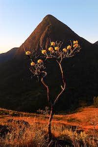 Yellow Ipê and Cone rock