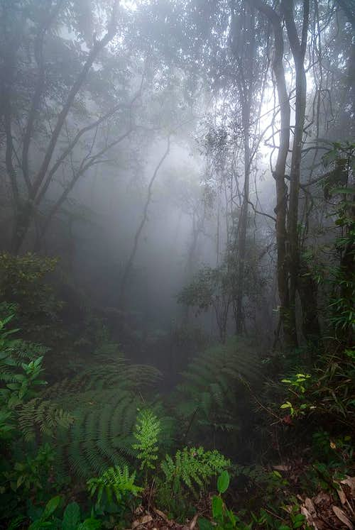 Fog in rain forest - tinguá biological reserve
