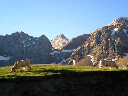 Early morning at the Col de Tentes