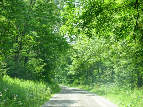Forest Road in Allegheny Mountains