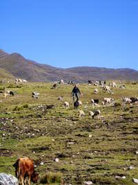 Natural Herder