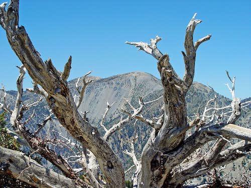 Mount Baldy from Telegraph Peak