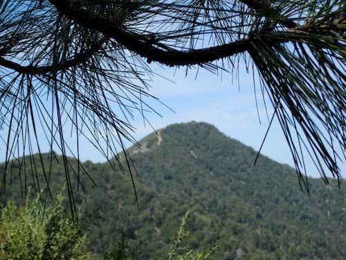Mt. Lawlor ( 5,957' ) from Barley Flats Ridge
