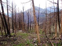 The Charred Remains of the Northern Sawtooth Range