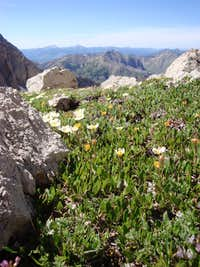 Here's A Pic From That Little Meadow Just Below the Summit