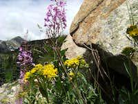 Wildflowers Near Mt. Bancroft