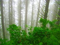 Foggy and Rainy, Cape Lookout Trail