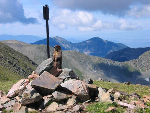 Marmot Guarding its Turf on Mount Walter, NM.