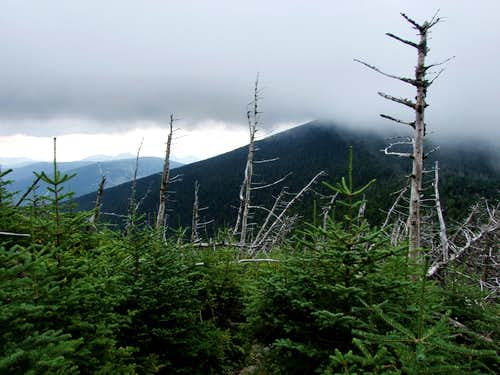 Blowdown on North Twin Mountain